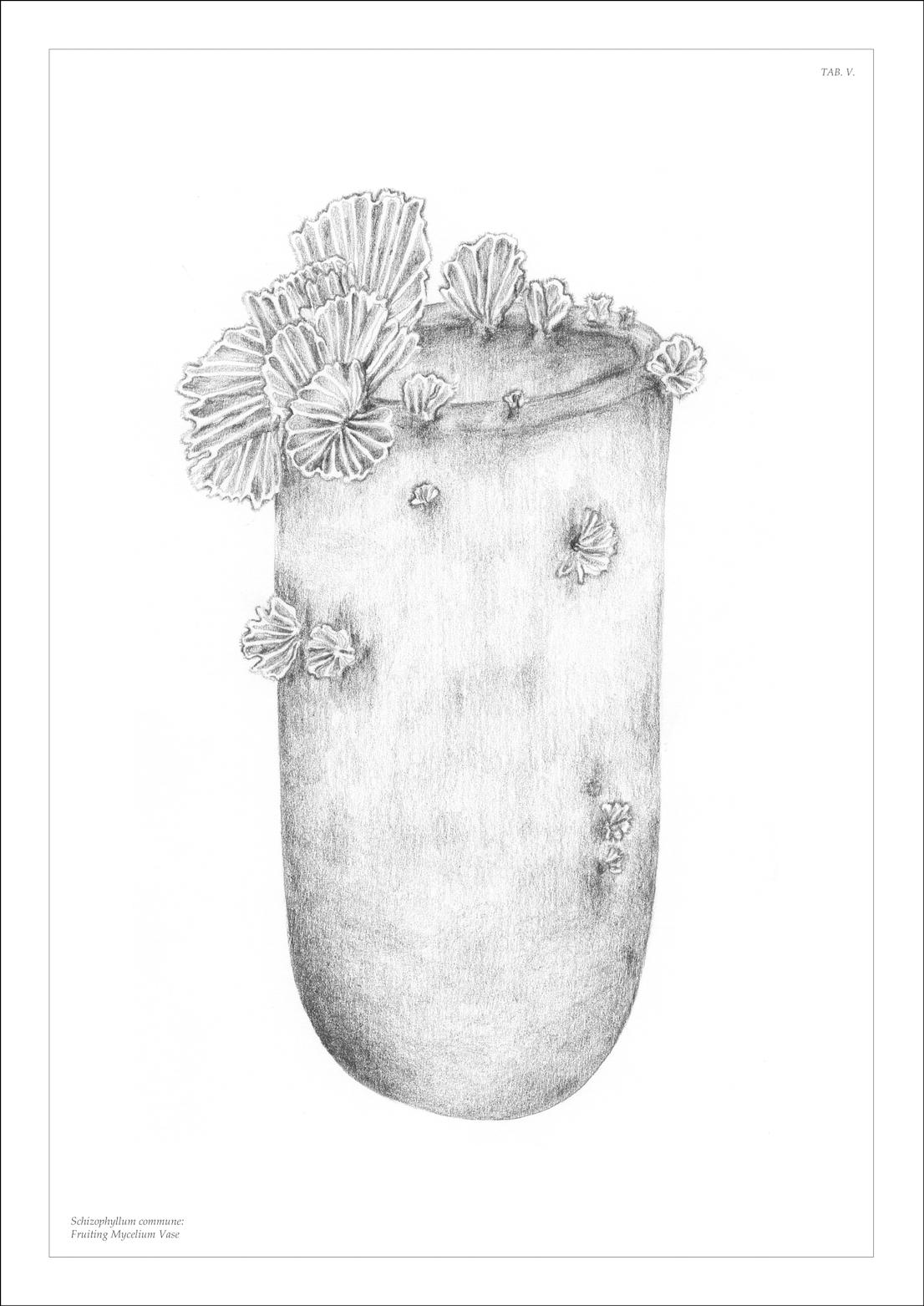 Officina Corpuscoli - Maurizio Montalti, The Growing Lab, 2014.